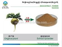 Organic Maca Herb: Maca ( Lepidium meyenii ) / Maca P.E. / Maca Extract Powder for man's health