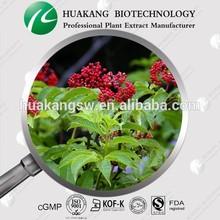 Elderberry extract Anthocyanidins Flavones Anti-Oxidation Cosmetics ingredient