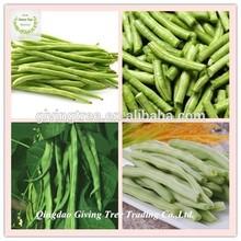 IQF new season frozen green bean