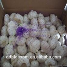2014 New Crop China Fresh Garlic from Jinxiang city