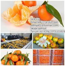 fresh mandarin orange/fresh baby orange for export/ fresh citrus fruits orange