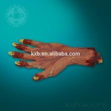 A02-006 humano anatomía educación médica modelo de la mano, Figuras de las personas para el modelo