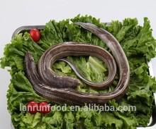 Frozen Conger Eel