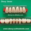 3-capas amarillo dentales para dentaduras de acrílico dientes de resina sintética
