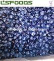 bleuets congelés en vrac bleuets congelés pour la vente