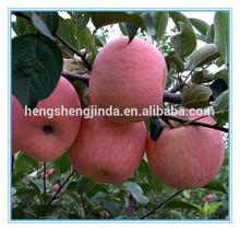 china fresh fuji apple to Bengal /wholesale prices apple fruit