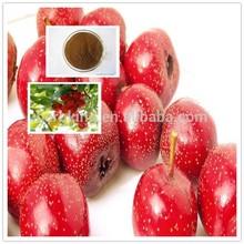 Factory Supply Hawthorn Leaf extract Maslinic acid 10%-98% Hawthorn extract