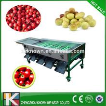 fresh friut grading machine, jujube grader sorter TM:cn1510719744