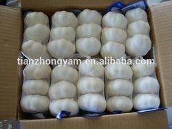fresh Chinese garlic supplier