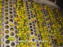 2014 new crop Baby Mandarin Fruit exporter with best quality