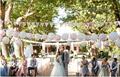 venta caliente populares ronda baratos linternas chinas para la decoración de la boda