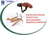 League brand Ganoderma lucidum Caterpillar fungus capsule enhance immunity Cardiovascular regular Qi and blood