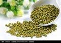 Usine pour matière fraîche haricots mungo verts pour la germination ou cuire