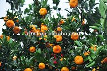 mandarin orange sale in dubai