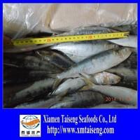 Frozen China Sardine Fish Scientific Name