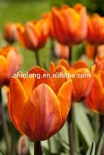 Deco glass tulip flower painting designs