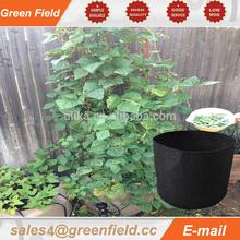 Green Field and unique smart bag mini garden pot