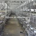 Capa galvanizada de carreras de cría jaula de palomas