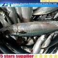 الأسماك المجمدة الماكريل المجمد السلمية 100-200g السعر