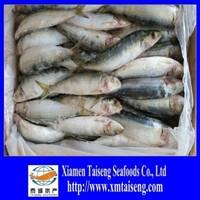 Frozen Sardine For Market Sale