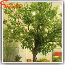 Songtao supplier hot sale banyan tree names of leaves in india