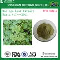 Natural Moringa extracto de hoja de polvo secado por pulverización de hojas de marango p.