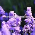 Huile essentielle pure pour diffuseur de parfum