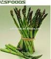 venta al por mayor de china iqf espárrago verde congelado