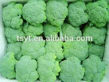 Fresh Broccoli China fresh vegetable for Korea Malaysia Singapore Indonesia