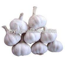 Pizhou jining jin xiang brand fresh natural garlic, snow normal white garlic, for thailand malaysia Pakistan 670 USD
