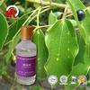 Pure natural pharmaceutical grade camphor oil