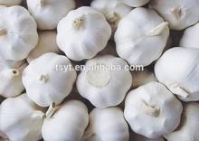 Normal white Natural Garlic,5.5cm natural fresh garlic