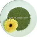 la nouvelle récolte de haricots mungo vert pour la cuisson