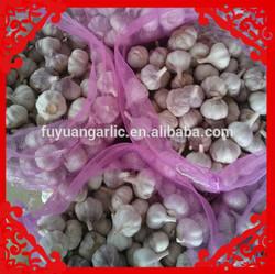 2014 crop red jinxiang garlic supplier