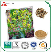 GMP Manufacturer Supply Inula Racemosa P.E. with Best Price
