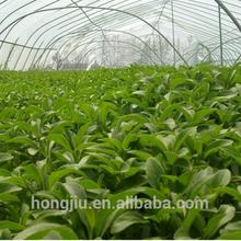 Bulk Pure Stevia Extract/ Stevia Extract Powder/Stevia Rebaudiana