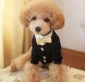 novo design venda quente baratos alta qualidade nova chegada big dog coat light up dog roupas
