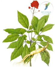 2015 Anticancer activity medicine for sexual power Red Ginseng Root Extract