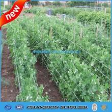 vegetable plastic trellis/bean and pea netting/garden bean netting