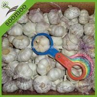 Fresh style garlic specification