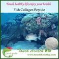 touchhealthy abastecimento cosméticos grau de peptídeo colágeno de peixes pó