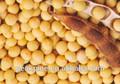 proteínaisolada de soja