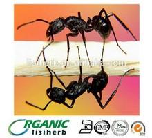 Men's health sex products black ants extract powder/pills/black ants powder
