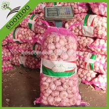 wholesale natural garlic price in china 2013