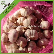 fresh red garlic exporter in China