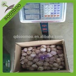 chinese fresh jinxiang garlic for sale