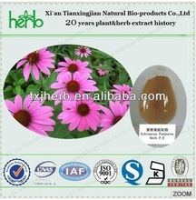 factory price polyphenols 4% echinacea purpurea extract with ISO