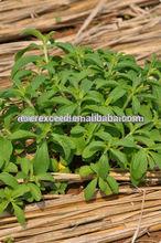 organic & pure stevia RA98%, 99%, 97%,90%