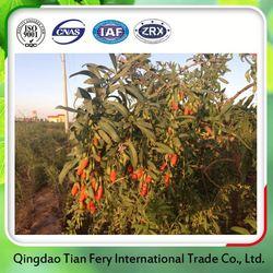China Wholesale Organic Goji Berry Fruit