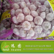 Fresh Natural Red Garlic Hot Sale